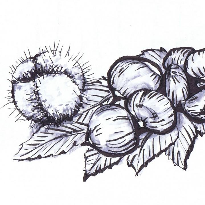 cucuDesign Zeichnen Tankas
